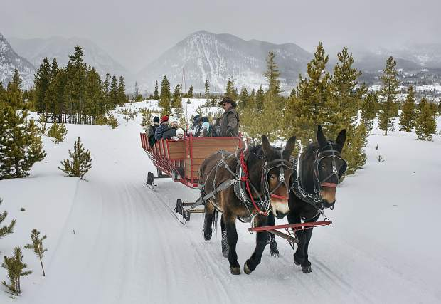 Two Below Zero sleigh driver Bob Dillon with the mules, Bright and Sunny, Thursday, Feb. 28, on the Frisco Peninsula.