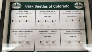 Colorado State Forest Service's entomologist explains what bugs are threatening Summit County's forests
