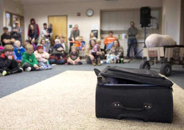 Cowgirl, an Australian cattle dog, peeks from the suitcase during the Top Hogs performance Thursday, April 18, at the Summit County Library in Frisco.