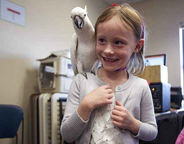 Salty, the performing bird, greets Mae Testin, 6, Thursday, April 18, at the Summit County Library in Frisco.