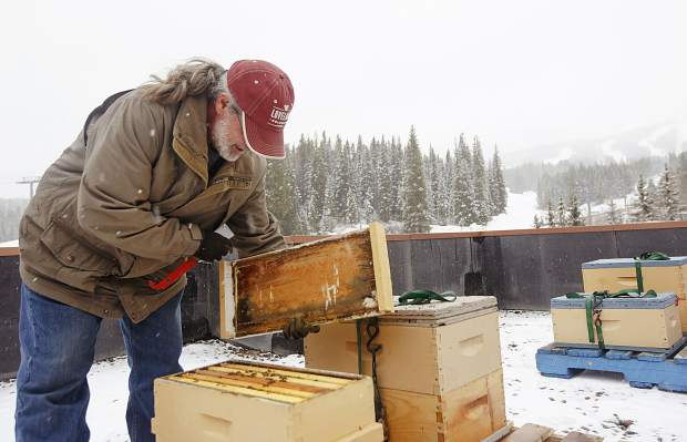 Beekeeper peers inside of one of the four colonies of honey bees on the rooftop of Beaver Run Resort and Conference Center Thursday, May 23, in Breckenridge. The bees will produce honey for sale at the resort, and contribute to the resort's renewed mission to increase sustainability.