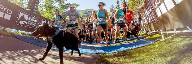 Pre-race training with your dog will help come race time.