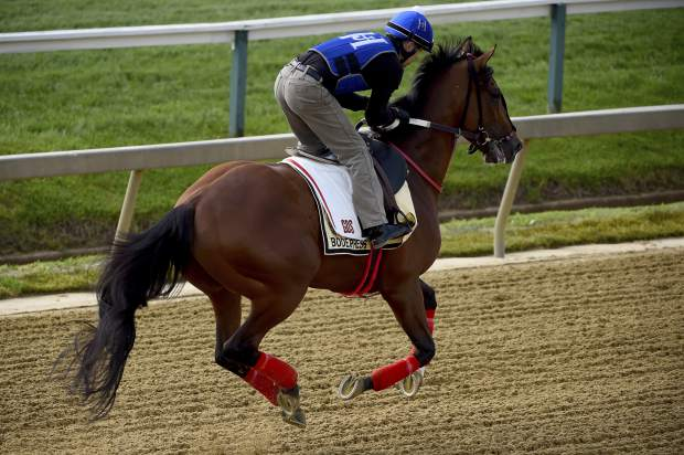 Bodexpress exercises in preparation for the Preakness Stakes on Thursday, at Pimlico Race Course in Baltimore.