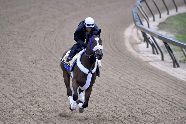 Signalman exercises in preparation for the Preakness Stakes horse race on Thursday at Pimlico Race Course in Baltimore.