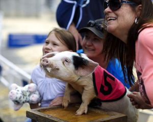 Photo essay: Pig races hit the track in Frisco