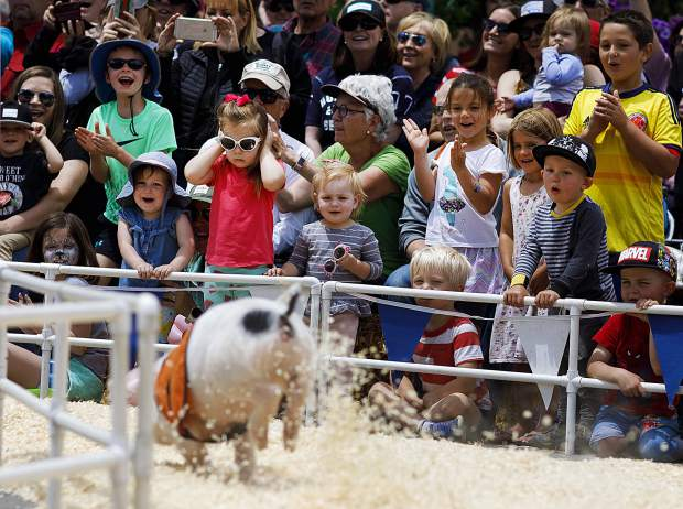 Spectators cheer on the All-Alaskan Racing Pigs as they sprint around the track Saturday June 15, on Main Street in Frisco.