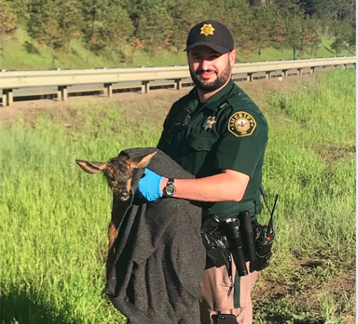 Colorado deer struck by motorcycle gives birth before dying