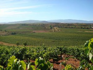 WineInk: Verdejo … Spanish for value