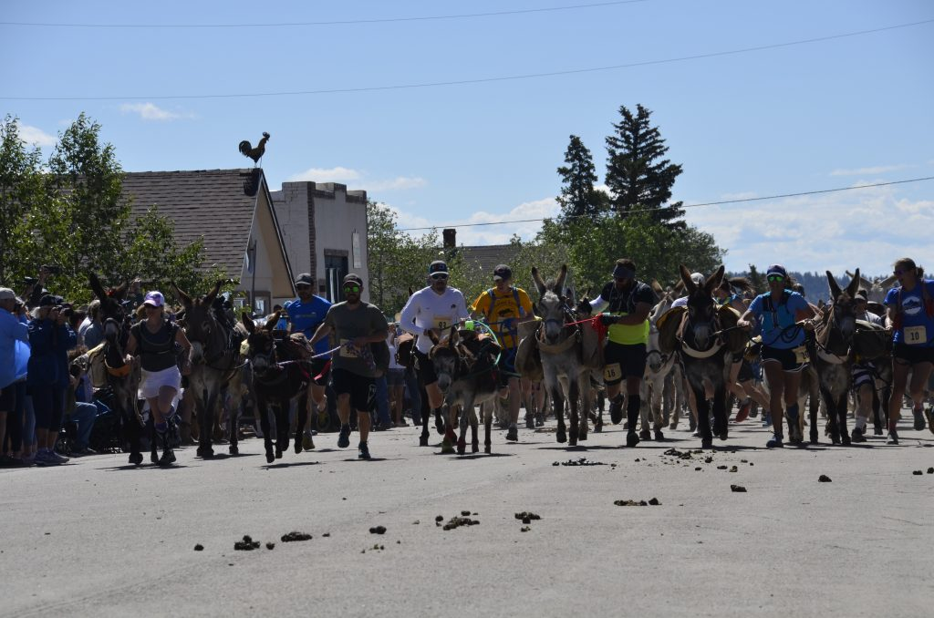 Racers and their burros barrel down Front Street at the start of Sunday's 71st annual Fairplay Burro Days World Championship Pack Burro Race.