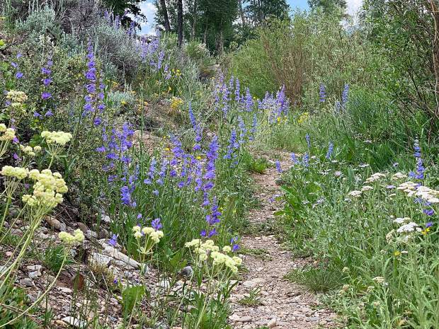 Wildflowers line a path in Silverthorne.