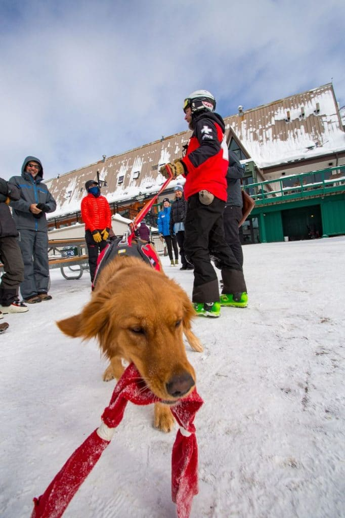 Tikka plays with her tug-toy at the Arapahoe Basin base area on Dec. 17, 2019.